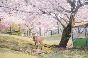 春天的LIFE有多美?